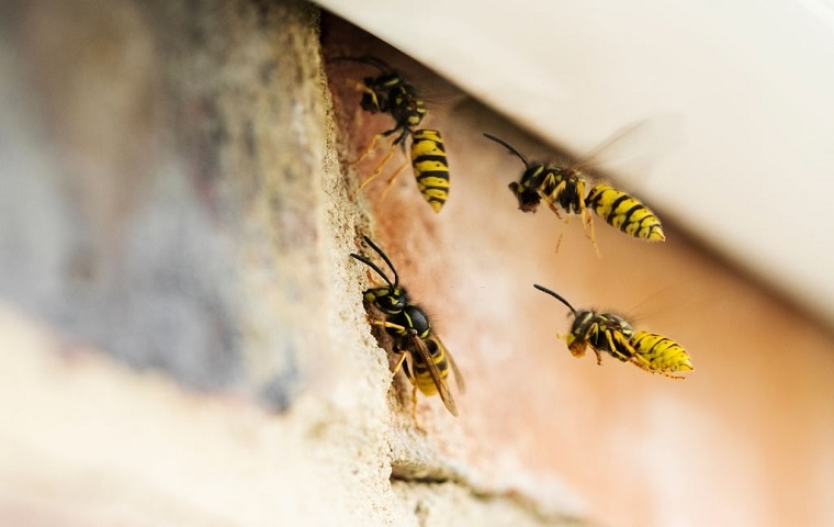 Bees & Wasps Control